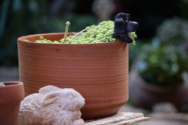 A potted plant with a ceramic dog hanging over the edge
