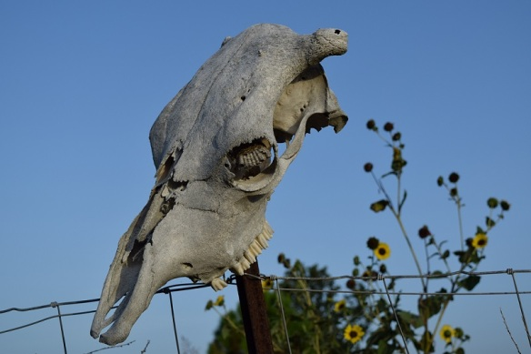 Skull, wasp nest and sunflowers