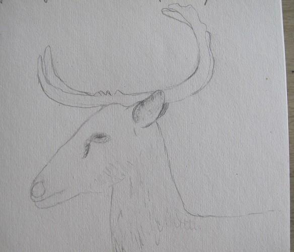 Eld's Deer sketch