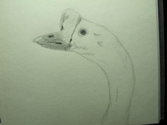 Sketch of goose head