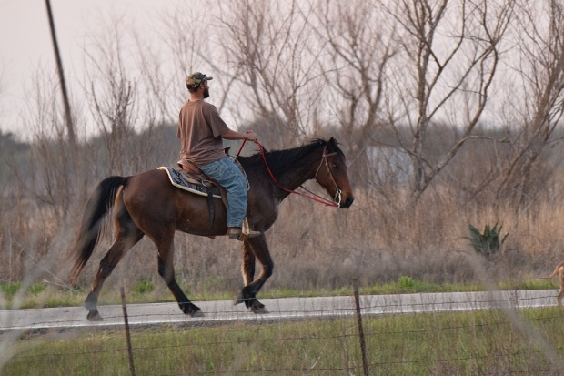 A man riding a horse on the road in front of my house