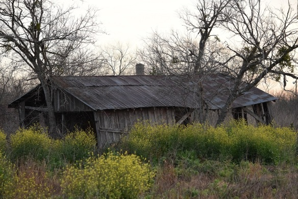 An old abandoned barn that is so old it is leaning to the side