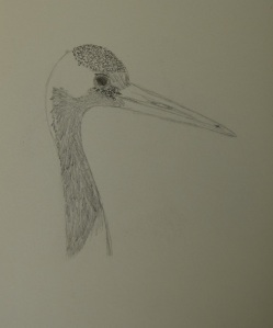 Sketch of the Red-crowned Crane