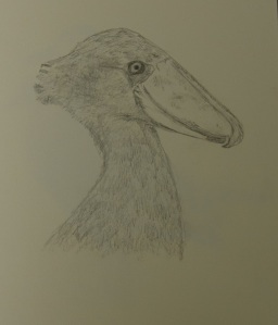 Sketch of the Shoebill Stork at the Houston Zoo