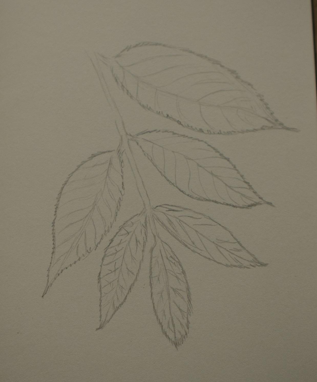 Pecan Tree Leaf