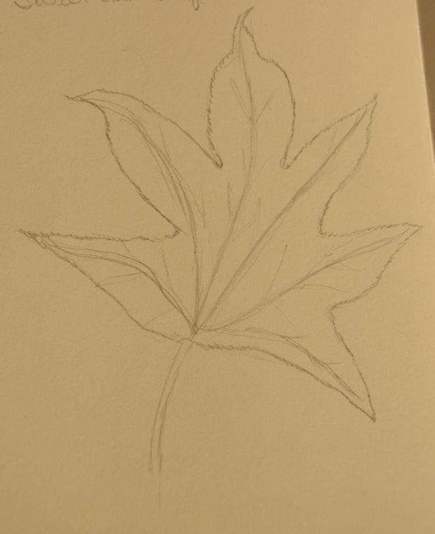 Sweet Gum leaf sketch