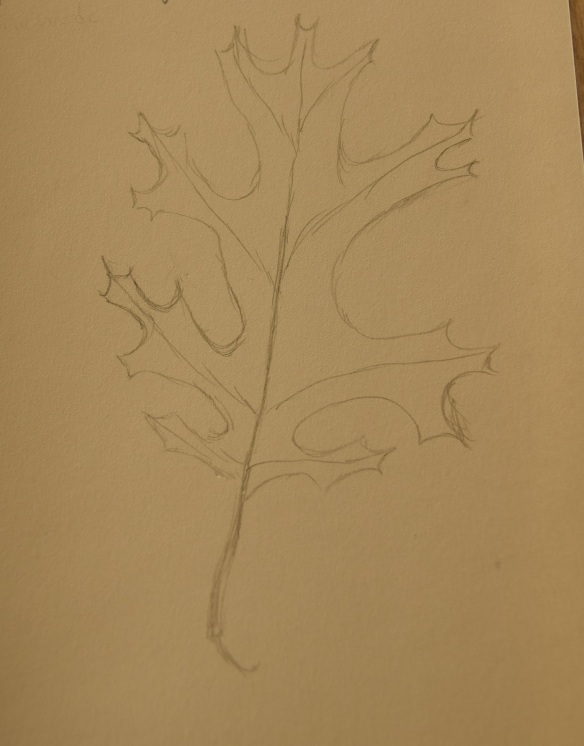 Sketch of a Red Oak Leaf