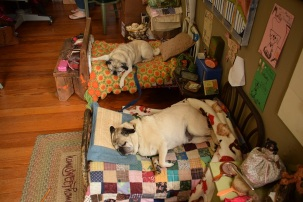 """Hudson and Molly on their """"sample beds"""" at Blackbird Antiques"""
