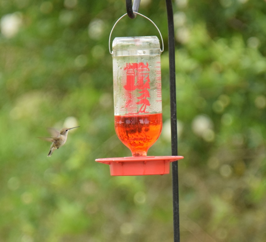 Happy to see the hummingbird feeder