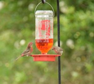 Liquid food for the birds