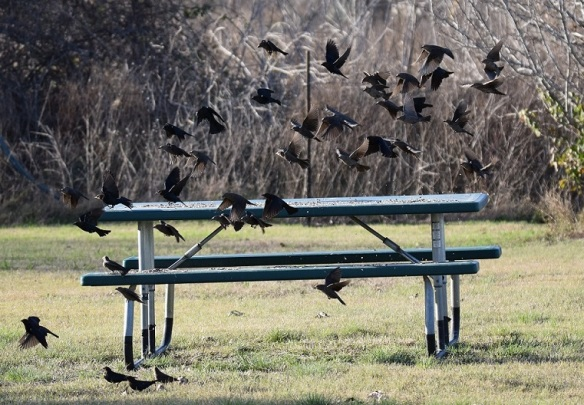 Birds flying around a picnic table that has bird seed