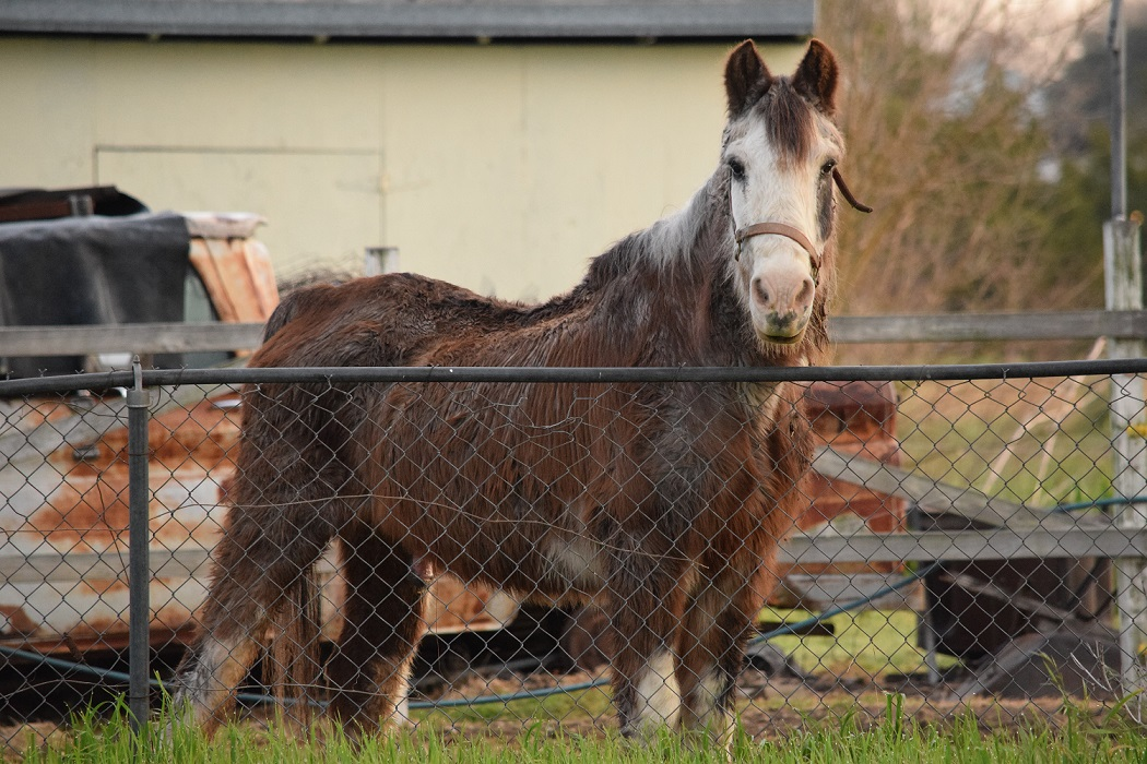 Old horse near the fence