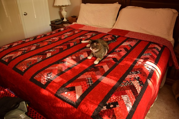Quilt on my brother's bed; cat on the quilt