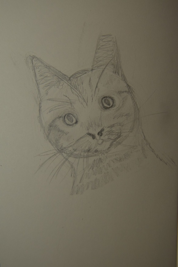 Sketch of Donald the cat