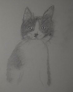 Sketch of Sally The Kitten