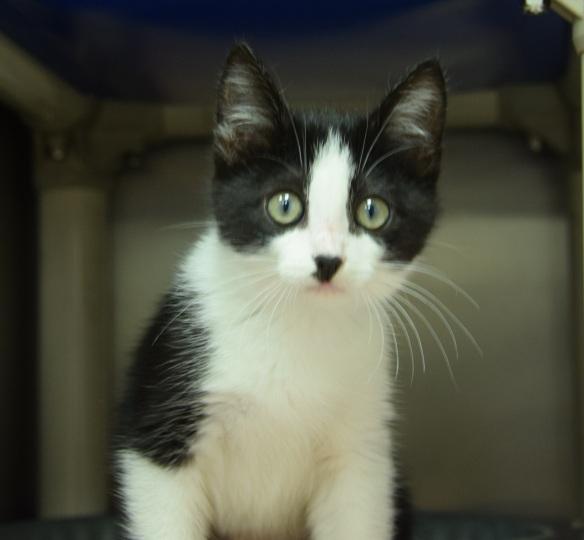 Sally The Kitten