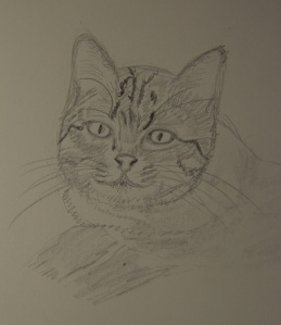 Sketch of Willa The Cat