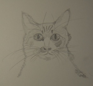Sketch of Marvin The Cat