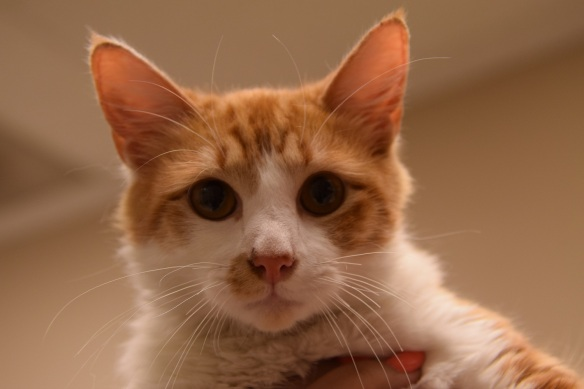 Marvin The Cat