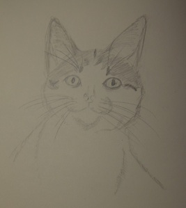 Sketch of Rush The Kitten with big ears