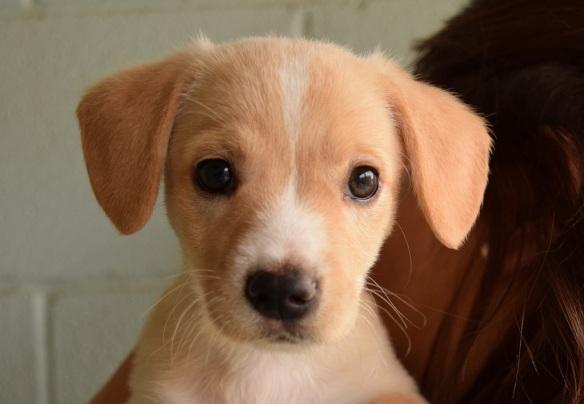Pria The Puppy