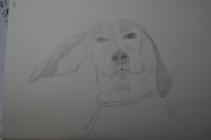 Sketch of Baxter the Dog