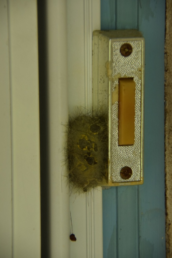 A cocoon abutting the doorbell