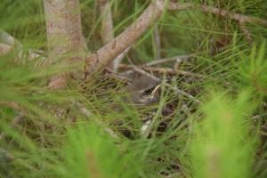 Third baby bird