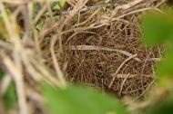 Mockingbird eggs gone