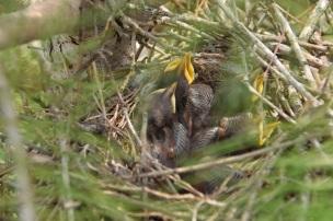 First baby bird photo