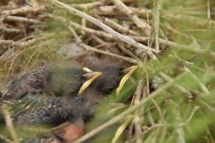 Second baby bird photo