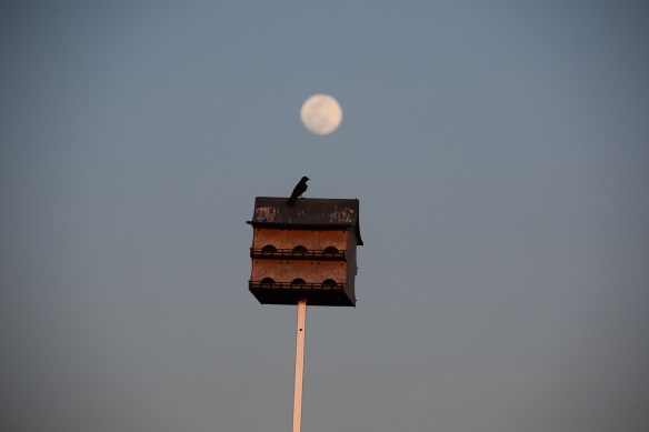 Full moon over Purple Martin house