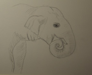 Sketch of an Asian Elephant
