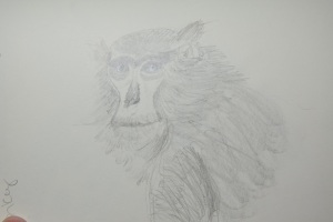 Sketch of the Monkey