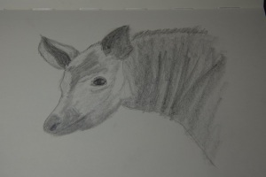 Sketch of an Okapi at the Houston Zoo