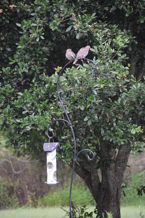 Bird feeder with two doves on top