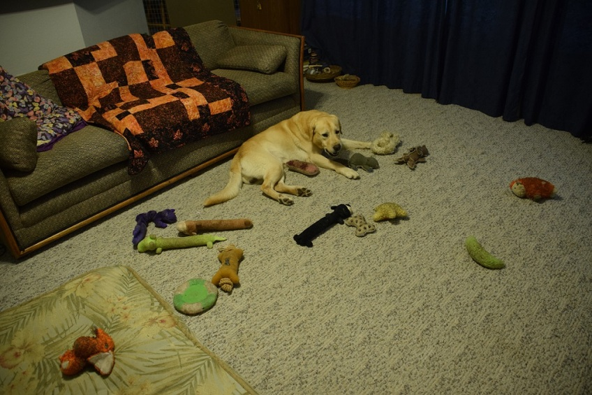 Some of Dusty's toys