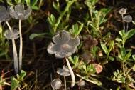 Mushrooms 015 s