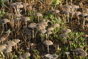 Mushrooms 017 s