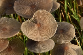 Mushrooms 026 s