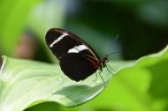 Butterflies 2s (1)