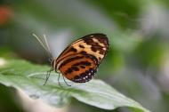 Butterflies 2s (2)