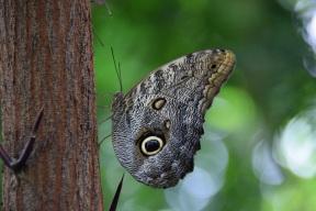 Butterflies 2s (3)