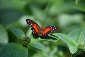 Butterflies 2s (4)