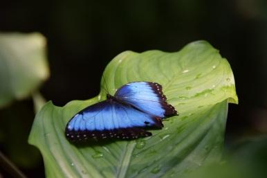 Butterflies 2s (5)