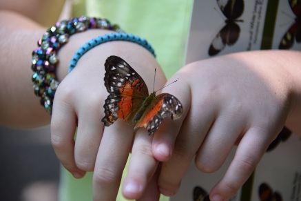 Butterly at the Cockrell Butterfly Center