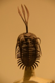 Trilobite at the Houston Museum of Natural Science