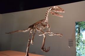 Dinosaurs s (1)