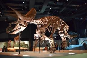 Dinosaurs s (2)