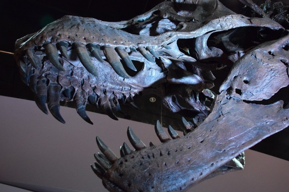 Dinosaurs s (3)